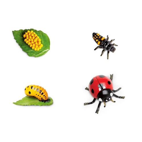 Montessori Ladybird Lifecycle Figures