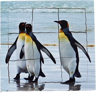 Penguin Lifecycle Layered Tray Puzzle