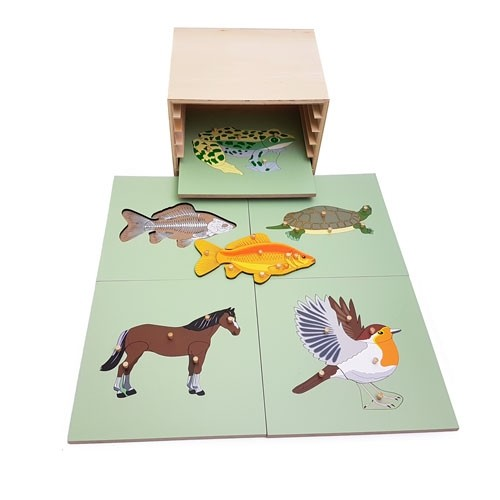 Discount Montessori Zoology Cabinet with 5 Puzzles with skeletons