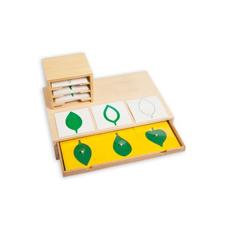Montessori Leaf Cards