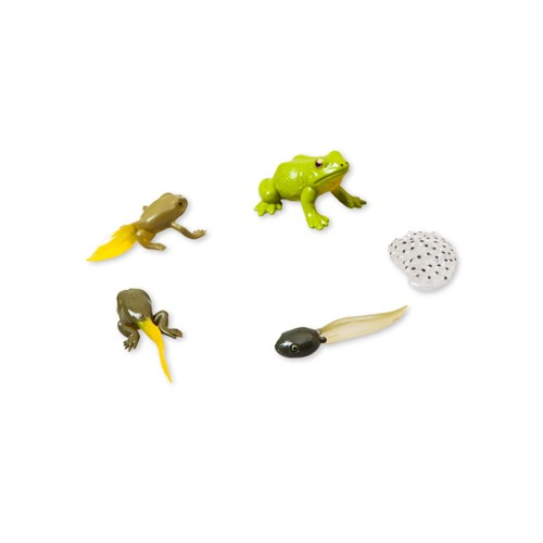 Montessori 5 Frog Lifecycle Figures