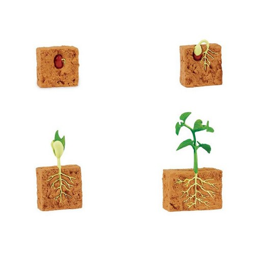Montessori Bean Plant Growth Models