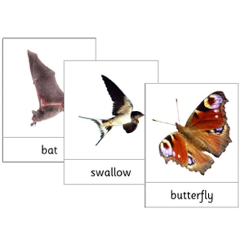 Montessori Air Wildlife Cards .pdf File