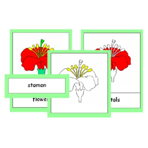 Montessori Parts Of A Flower Cards .pdf File