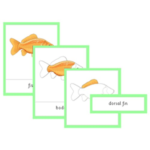 Montessori Parts Of A Fish Cards .pdf File