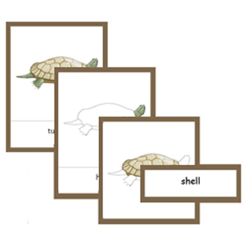 Montessori Parts Of A Turtle Cards .pdf File