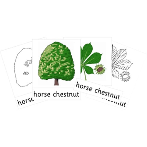 Montessori Native Trees Cards .pdf File