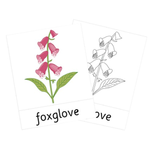 Montessori Native Wildflowers Cards .pdf File