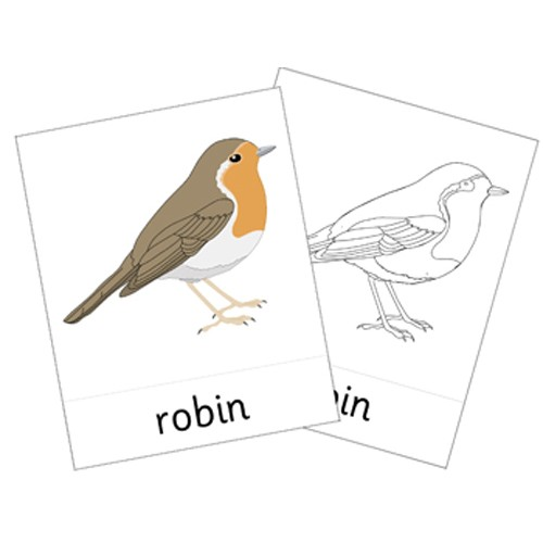 Montessori Native Birds Cards .pdf File