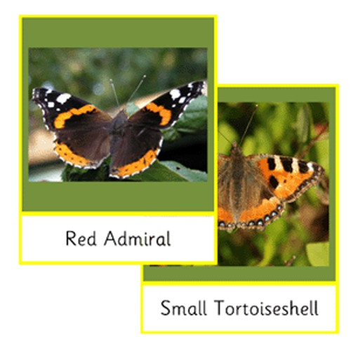 Montessori Native Butterflies Cards .pdf File