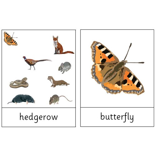 Montessori Meadow and hedgerow Wildlife .pdf File