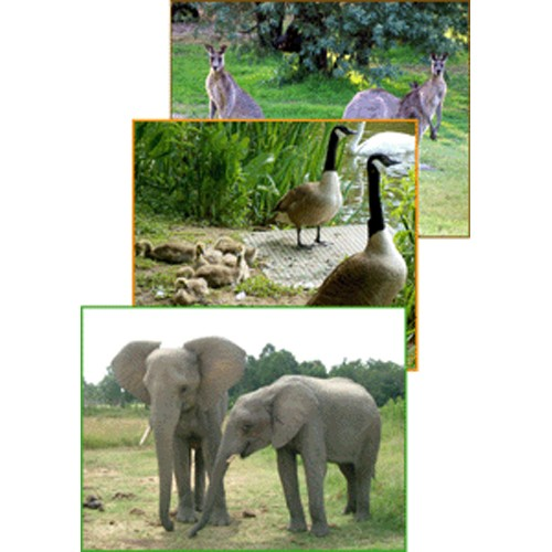 Montessori Continents Folders: Wildlife .pdf file